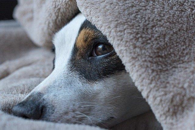Травмы, растяжения и переломы у собаки: первая помощь