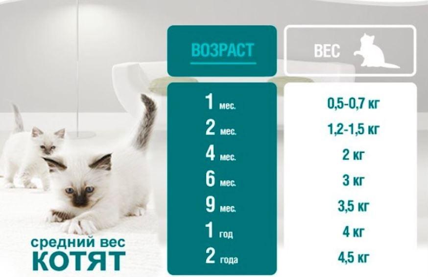 Сколько должен весить котёнок и что считается нормой?