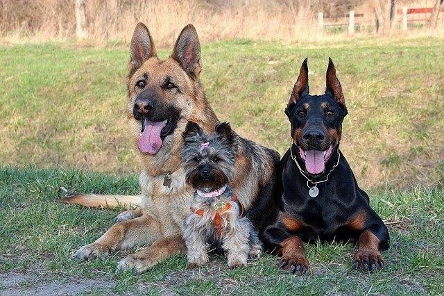 Популярные породы: рейтинг собак, их основные преимущества