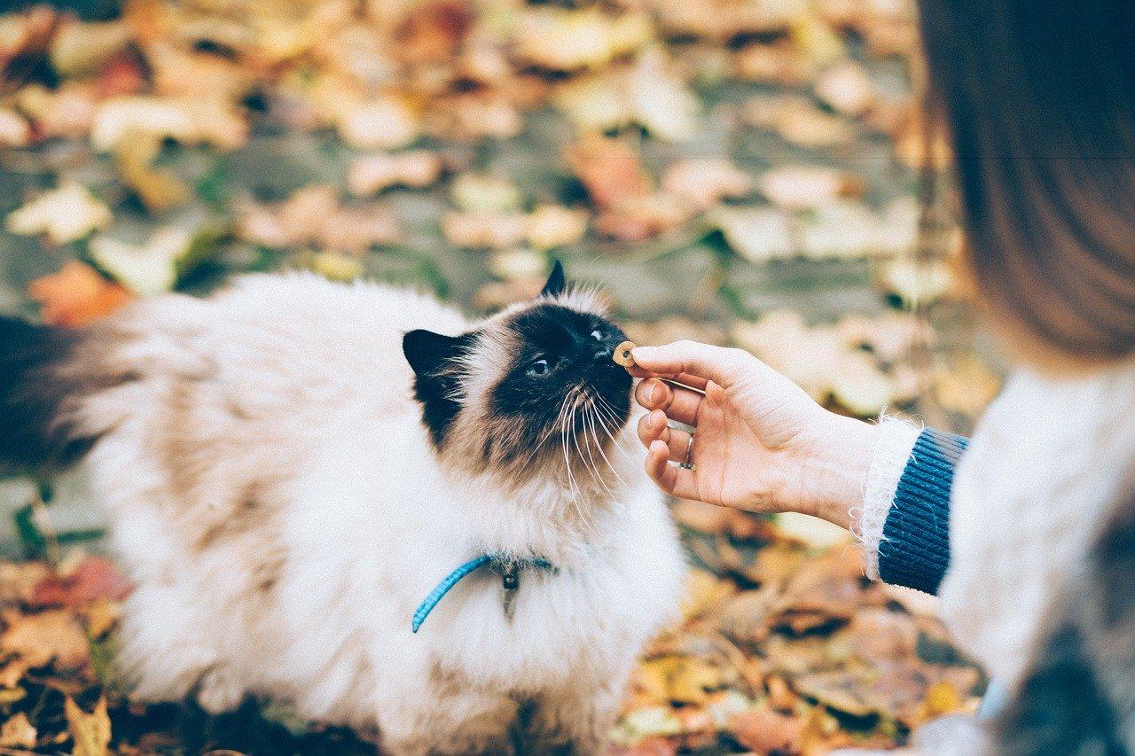 Уход  за кошкой и кормление после операции