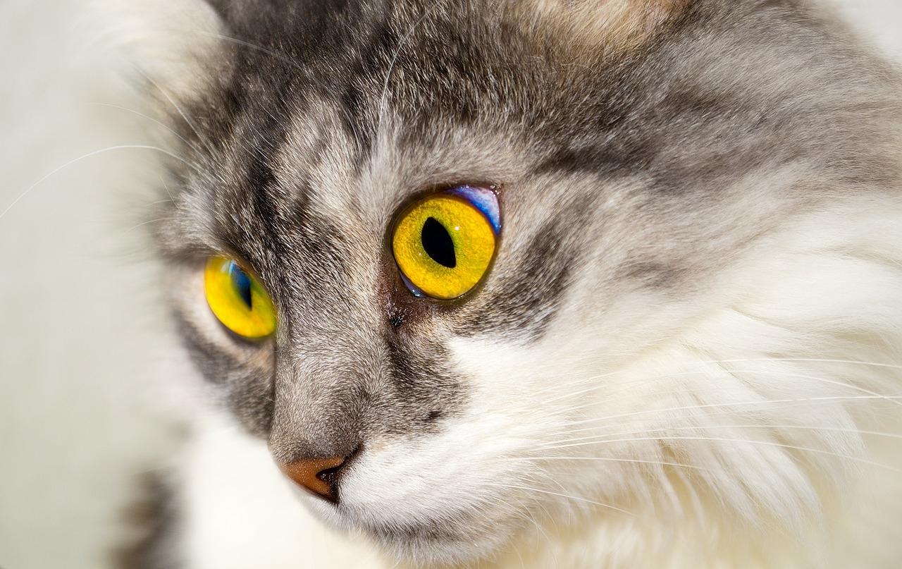 кошкачий глаз