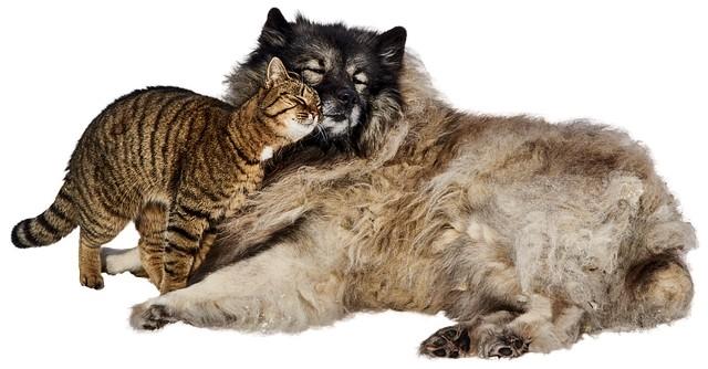 собачка и котенок