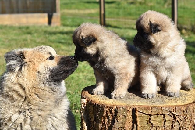 щенки и мама
