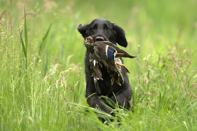 Собака на охоте. Добыча