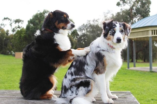 собачки дружат