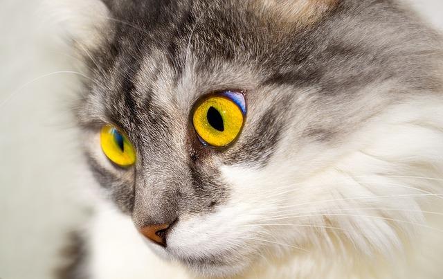 красивая кошка, красивые глаза у кошки