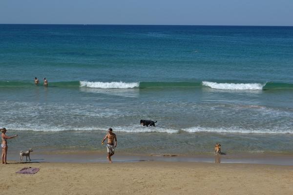 собачий пляж Тель-Авива