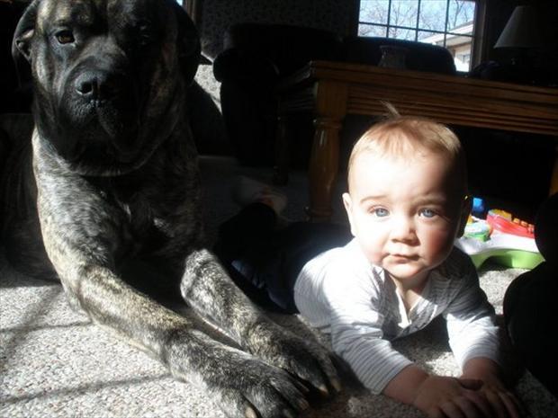 Большой пес и ребенок
