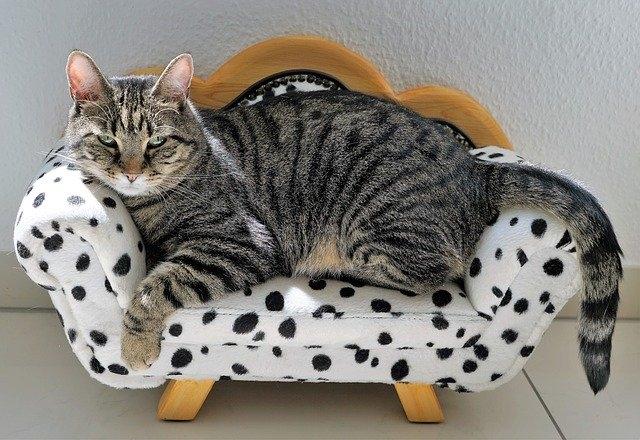 преимущества кастрации котов