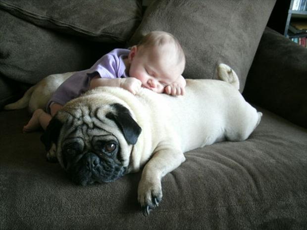 Мопс и малыш