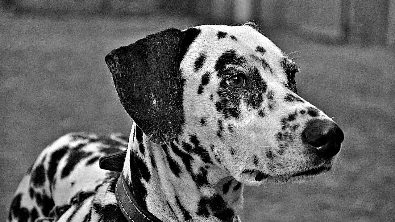 Выбираем собаку по гороскопу