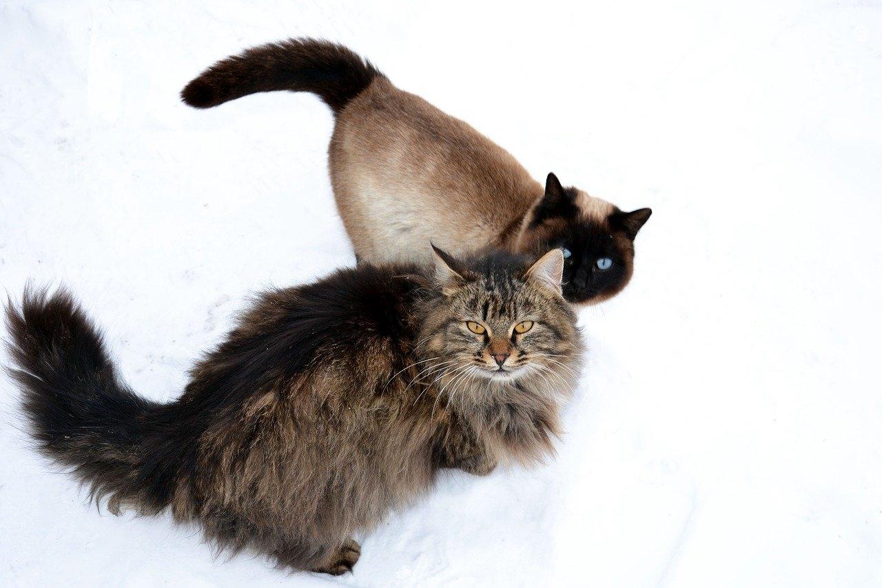 кошки, которые вам подходят