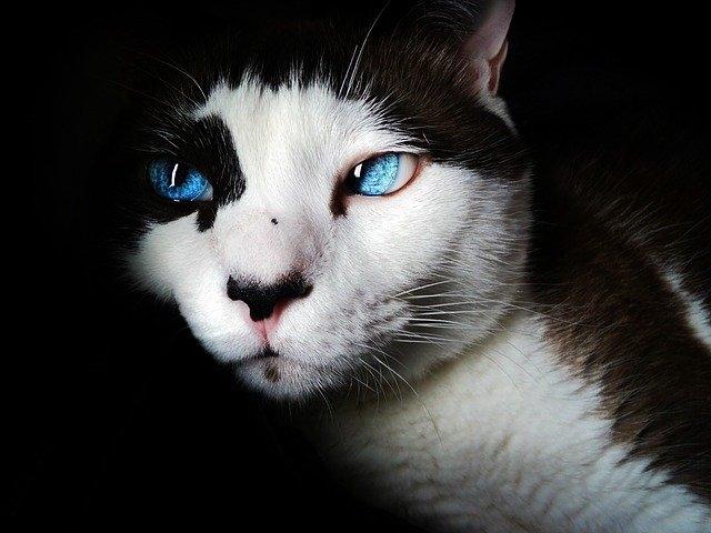 Шишка на хвосте у кота: причины, описание симптомов и методы лечения
