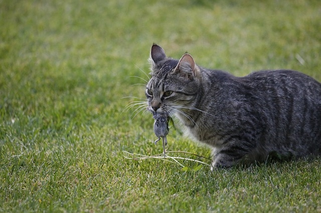 Кошки и их странные привычки