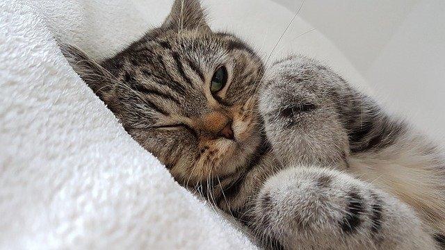 Ушки на макушке: болезни ушей кошек