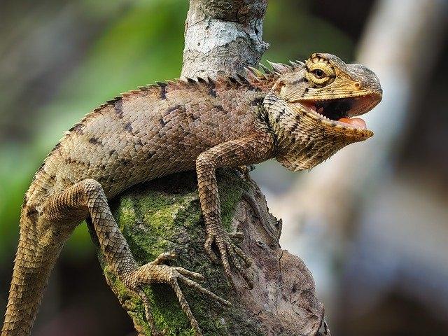 Питон и игуана: экзотические рептилии. Содержание в домашних условиях