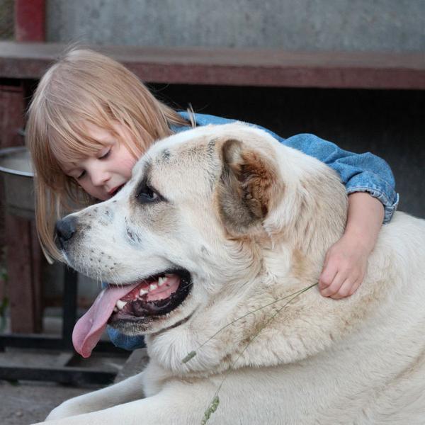 девочка и большая собака- любовь