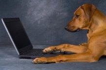 пес и ноутбук