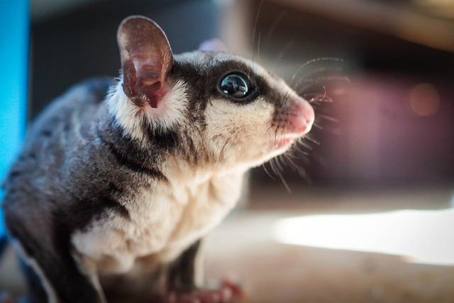 5 интересных животных, которых можно держать у себя дома