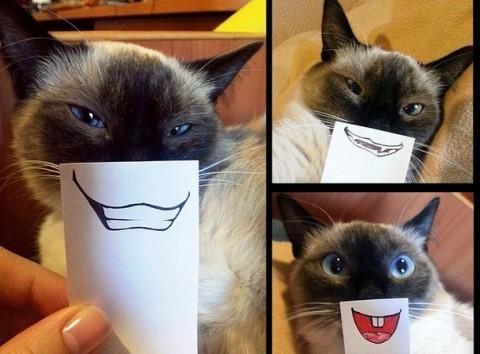 улыбки кошки