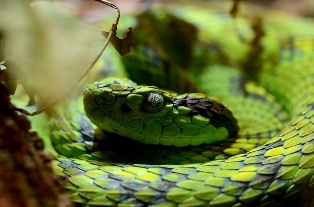 12 примечательных фактов о гремучих змеях