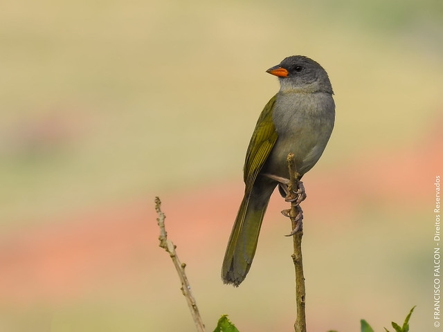 Уникальный мир животных и растений Патагонии