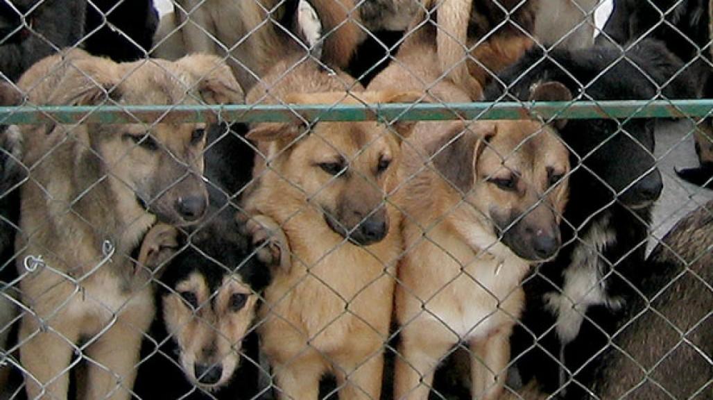 Бездомные собаки за решеткой