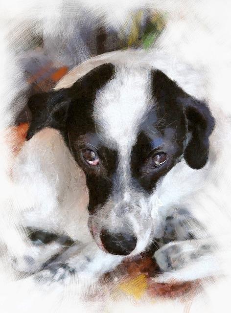 Собачья мимика: что означают выражения морды вашего питомца?