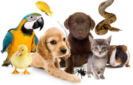 все животные на одной картинке