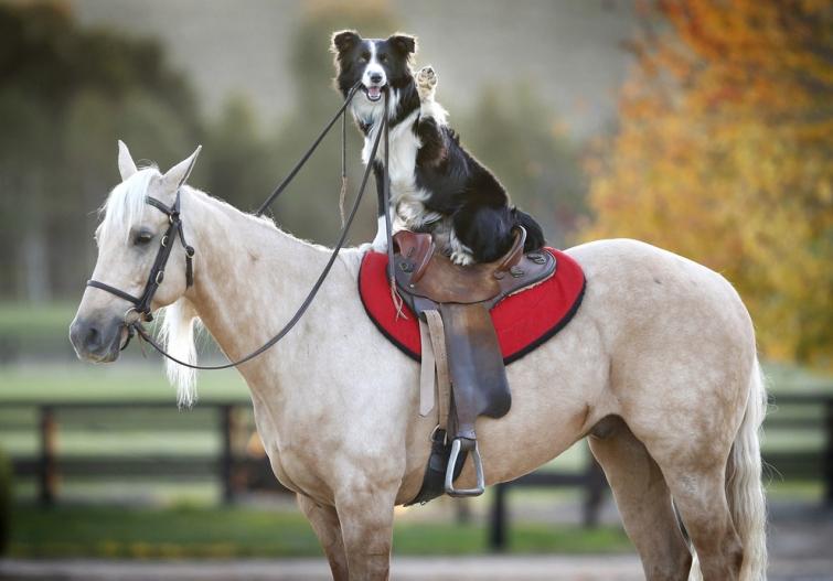 Собака и лошадь - друзья