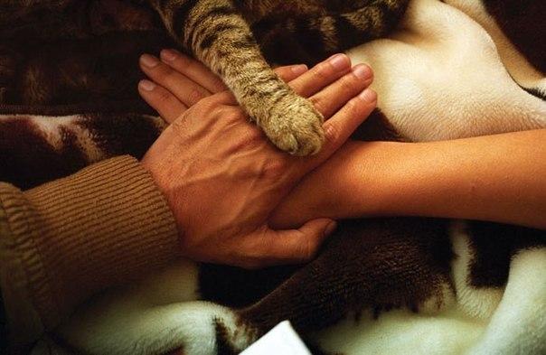 Человек и кот - дружба навеки