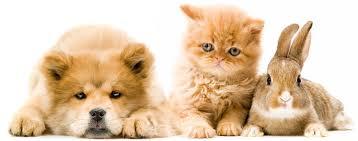 Кролик, собака и кошка