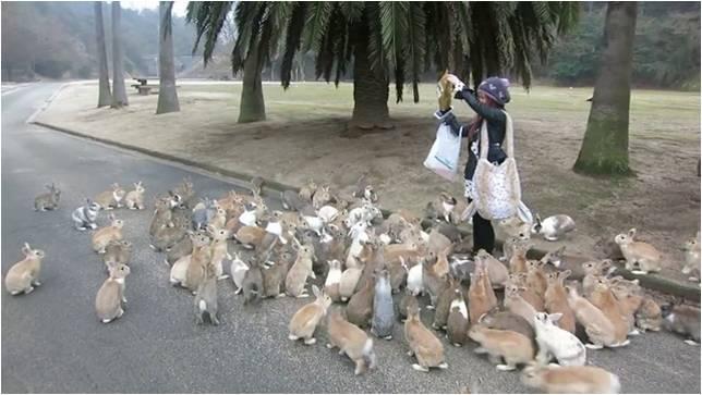 кролики в Японии