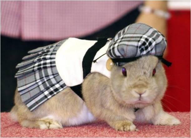 кролик в кепке
