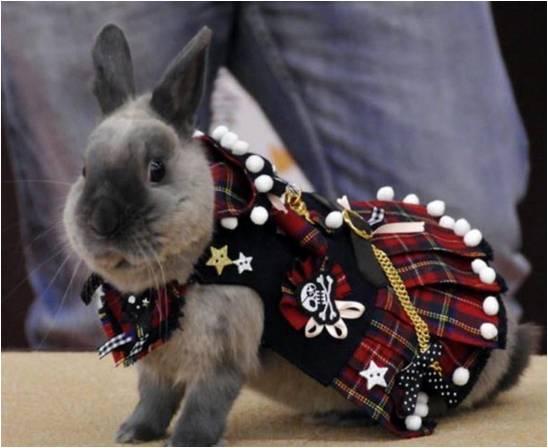 Кролик в одежде нарядный