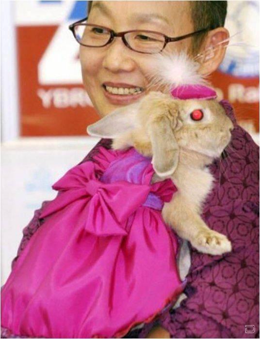 Кролик в шапочке
