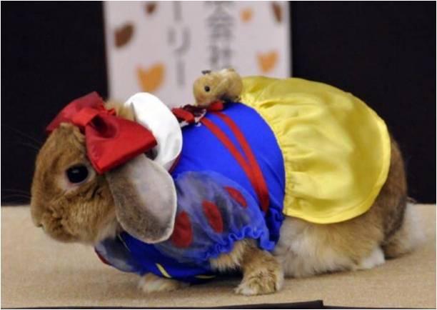 Кролик как человек одет
