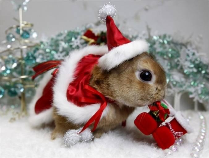 Новый год кролика в Японии