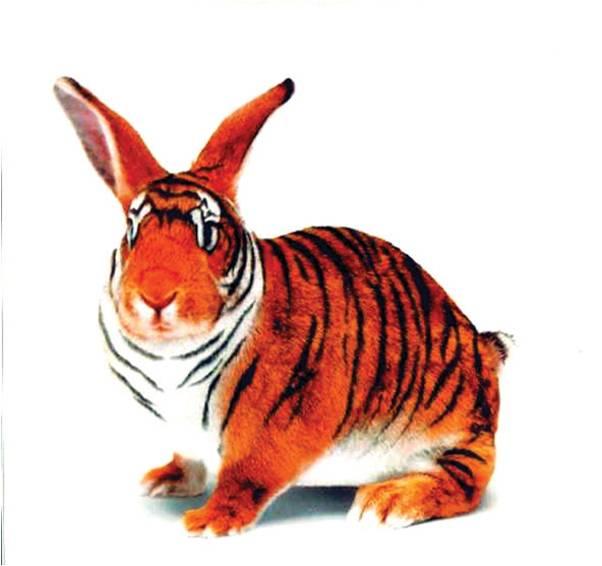 Кролик- тигр
