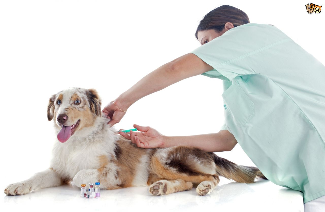 Прививка для собак эурикан - 848