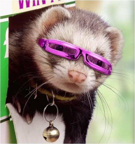 Хорек в модных очках