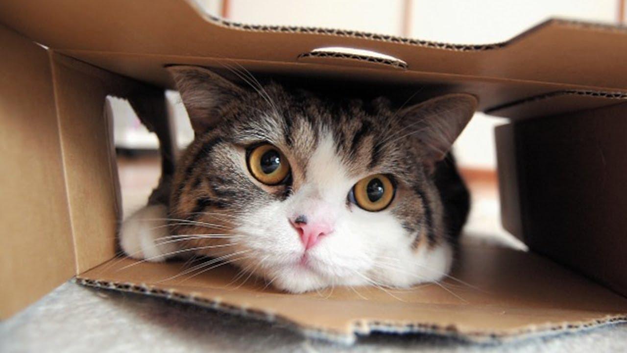удивительная кошка Мару