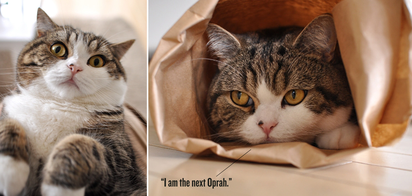 красивая кошка Мару