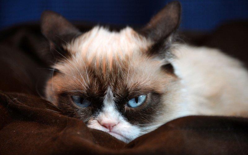 Она хорошая кошка, но сердитая