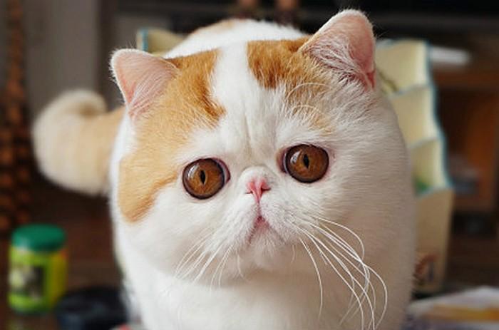 Хорошенький кот Snoopi