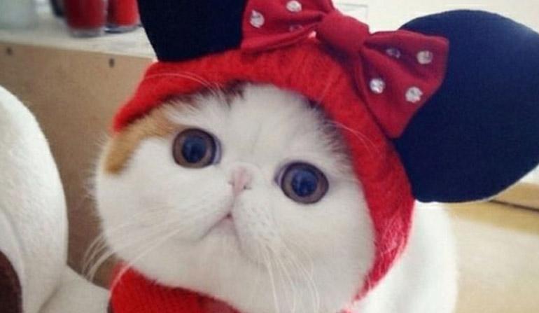 Котик Snoopi