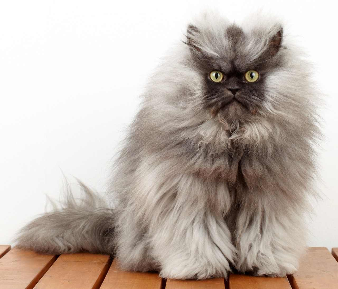 Какой красавец кот Colonei Meow