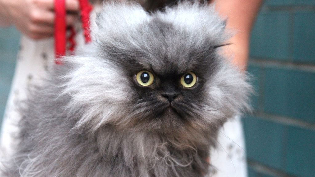 Угрожающий кот