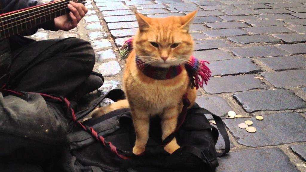 кот-музыкант-слушатель