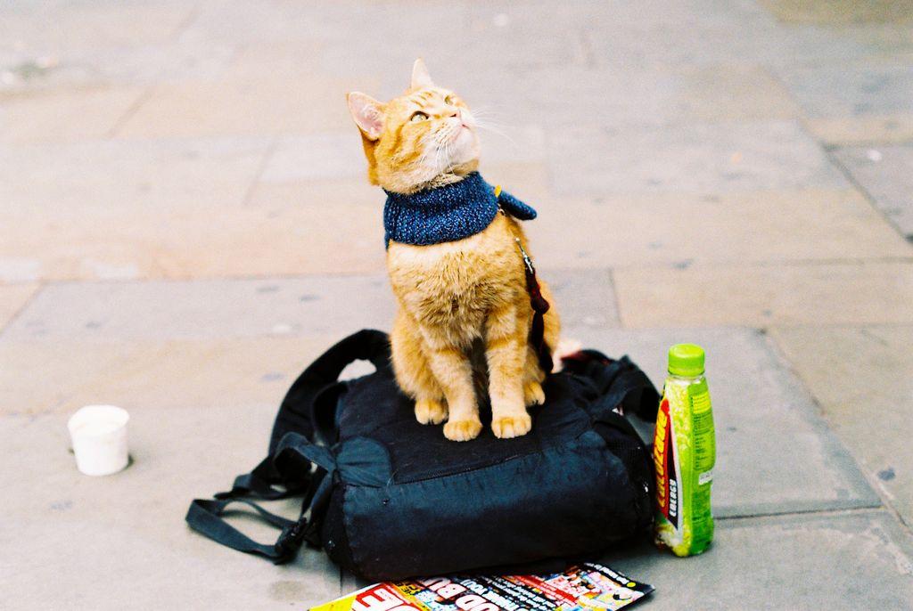 Кот-Боб и уличный музыкант